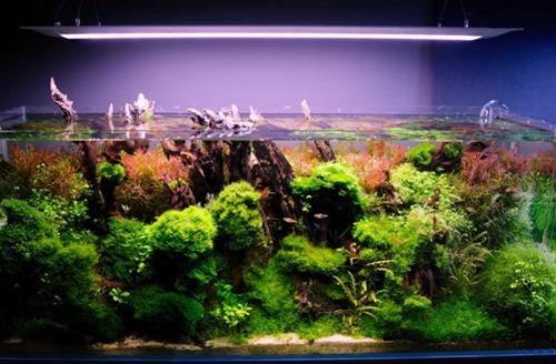 aquarium-algae-control