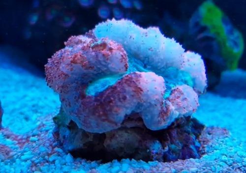 bleaching-coral