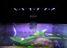clip-on-led-aquarium-light