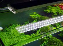 planted-aquarium-light