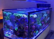reef-aquarium-light