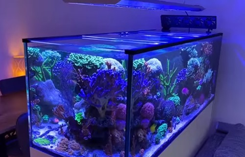 reef-aquarium-light
