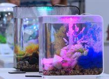 aquarium-gift