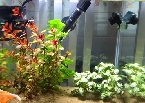 aquarium-heater.jpg
