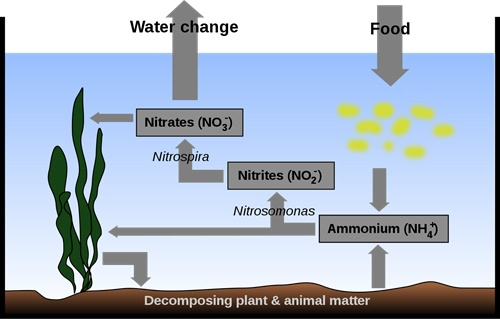 fishless-nitrogen-cycle