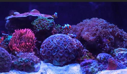 20-gallon-reef-tank