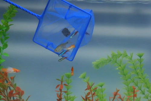 net-and-move-fish