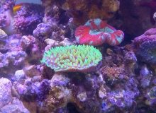 reef-aquarium.jpg