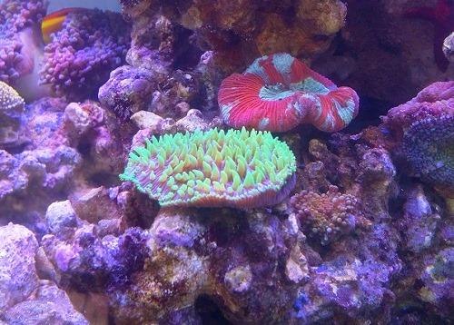 reef-aquarium