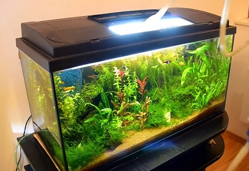 10-gallon-fish-tank