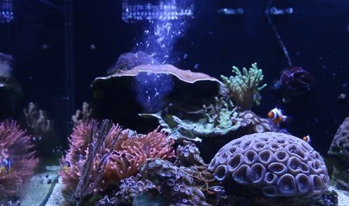 coral-food