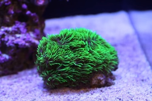 reef-tank-substrate