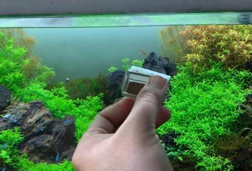 using-an-algae-magnet-cleaner
