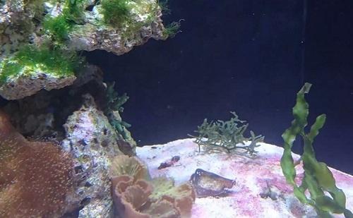 lagoon-aquarium