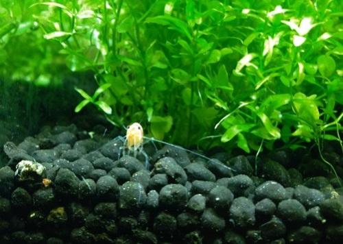 planted-aquarium-soil-substrate