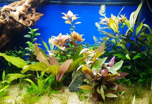 planted-tank-substrate