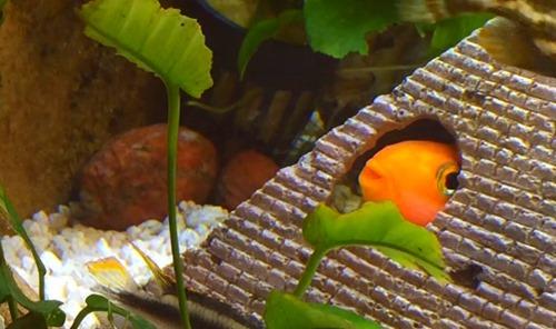 cave-aquarium-ornament-1
