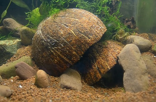 cave-aquarium-ornament