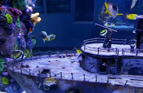 shipwreck-aquarium-decoration