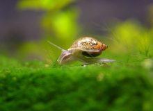 pond-snails.jpg